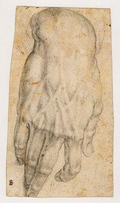 Bronzino, Study of a Hand 16th C.