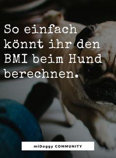    #Hund    Ideen    #Hunde    Tipps    Tricks    Ideen    Liebe    Welpen    Bilder    #Gesundheit