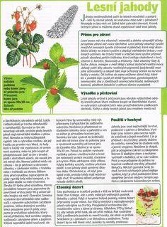 - Korn, Detox, Strawberry, Fruit, Lifestyle, Healthy, Garden, Plants, The Fruit
