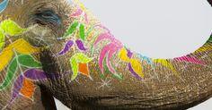 Abbiamo scelto l'elefante come simbolo per il nostro progetto di formazione sull'invecchiamento.