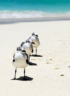 Seagulls all in a row