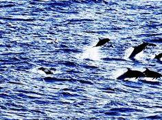 dolphin geweldig