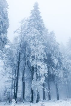 Fog & Snow by janeway1973