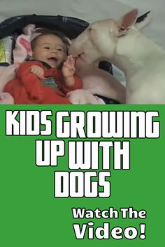 If you take the time to introduce your pets to your children properly, it is possible for your kids and pets can live in harmony.  HERE'S HOW ==> https://www.dailyoffersandsteals.com/blogs/daily-offers-and-steals-blog/kids-growing-up-with-dogs