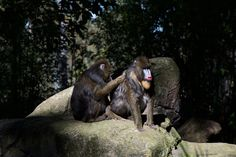 Togetherness by GPNaturePhotos on Etsy