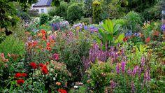 The Dillon Garden  aangeboden door Helen Dillon