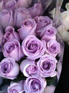 Lavender roses.