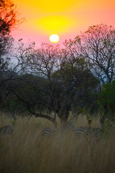 ✯ Our Photography: Sunset over the Serengeti ✯
