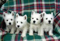 these guys are adorable.  Makes you want to get all four