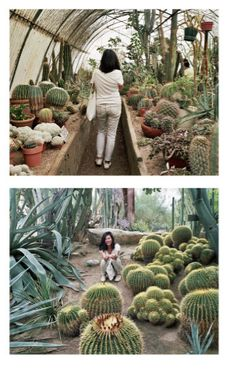 this reminds me of the exquisite succulent and tropical greenhouses at Biltmore estates