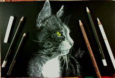 Hola Feliz Domingo.... Mi último dibujo, un hermoso gatito, la verdad es que me encantan los gatos y pos los perros XD recuerda que si quieres ver el video de este precioso dibujo y con mis comentarios, entra a mi canal de youtube y suscribete a él para ver todos nis videos... te dejo el link... :) 😳😍😜😝😘 .  https://www.youtube.com/watch?v=CY_9m-u6kYg By Karina Aparicio. . .  Por cierto Recuerda dar like y compartir... besos...   🎨 #art #arte #cat