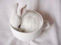 Tea pig? NO, tea bunny :)