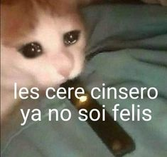 Memes Humor, Cat Memes, Sad Cat, Spanish Memes, Mood Pics, Meme Faces, Stupid Memes, Reaction Pictures, Really Funny