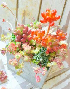 Succulent Arrangements, Planting Succulents, Cute Pokemon, Garden Art, Floral Wreath, Wreaths, Table Decorations, Flowers, Green