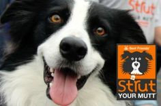 "Hot tips for raising money through Strut Your Mutt.  ""People want to donate… you just have to ask them."""