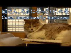 ふてぶてしく見えるレイ【かわいい子猫のおもしろい動画】