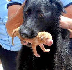 Heroína: Madre canina recibió la ayuda de los bomberos para salvar a sus cachorros - Mascotas 24/7
