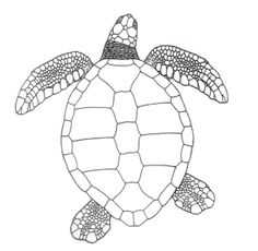 Green Sea Turtle   Green turtle, Turtle facts and Turtle