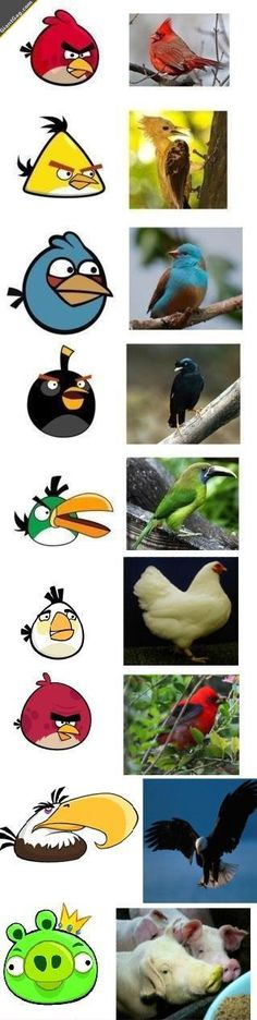 Real Life Angry Birds Characters,  Click the link to view today's funniest pictures!