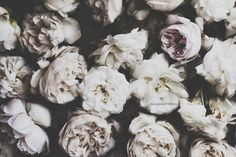 white flowers make me happy | honeypieLIVINGetc