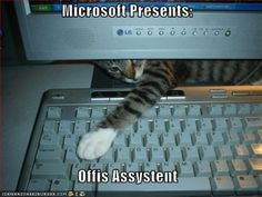 funny_pictures_cat_keyboard_microsoft_assistant1-s500x375-1074-420.jpg (420×315)