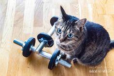 Magnesium gegen Muskelkater – Hilft das wirklich? Der große Check! Magnesium, Cats, Online Check, Animals, Fitness, Muscle Pain, Athlete, First Aid, Health