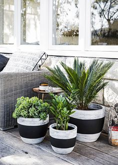 DIY the latest trend in pots with Tara Dennis and Home Beautiful
