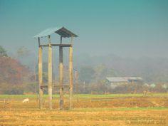 Buxa Tiger Reserve - near Alipurduar, West Bengal