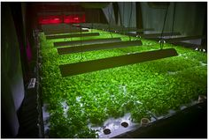 """Edel is the founder of """"The Plant,"""" an old meatpacking facility transformed into a social enterprise that will grow food sustainably while producing zero net waste. #sustainability #greentech #innovation"""
