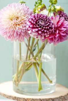Dahlias in a vase. Photo by Michelle Smith.