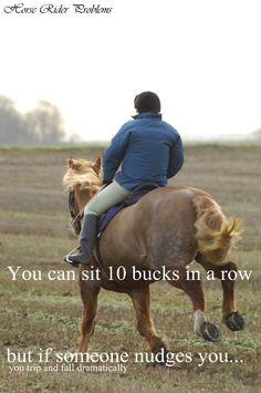 Pretty much lol>>>proved it over my last lesson! - Horses Funny - Funny Horse Meme - - Pretty much lol>>>proved it over my last lesson! The post Pretty much lol>>>proved it over my last lesson! appeared first on Gag Dad. Funny Horse Memes, Funny Horses, Cute Horses, Beautiful Horses, Funny Puns, Equestrian Memes, Equestrian Problems, My Horse, Horse Love