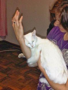 Felicity Writing Away: Side by Side Poems, Writing, Sayings, Cats, Animals, Gatos, Animais, Animales, Lyrics