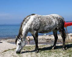 Beach horse No 1 by Jens Gyldenkærne Clausen, via Flickr