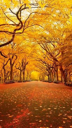 New York Central Park in Autumn nature eco beautiful places landscape travel natura peisaj World's Most Beautiful, Beautiful World, Beautiful Places, Beautiful Pictures, Beautiful Park, Hello Beautiful, Beautiful Scenery, Absolutely Stunning, Beautiful Landscapes