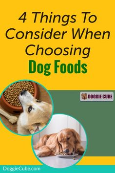 There are several factors to consider when choosing the right food for your dog. Different dogs have different nutritional needs at different stages in their lives. Here are some things to consider when selecting the food you'll give your dog. #dogfood #dognutrition #dogdiet