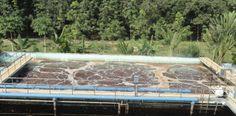 Xử lý nước thải chăn nuôi heo tại Cần Thơhttp://bunvisinh.com/xu-ly-nuoc-thai-chan-nuoi-heo-tai-can-tho.html