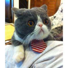 Uncle Liu, IG: leonliu  #cat #catsofinstagram