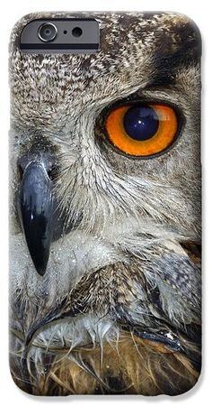 iPhone 6 Case Eagle Owl (Bubo bubo) portrait with wet feathers and intense orange eye looking at you. Also available for iPhone 7, 5, 4 and Samsung Galaxy. (c) Matthias Hauser hauserfoto.com
