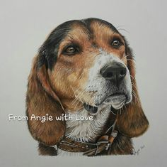 This coloured pencil dog portrait of Jess the Beagle shows how working from a high resolution photo really helps. Coloured pencil on Bristol board