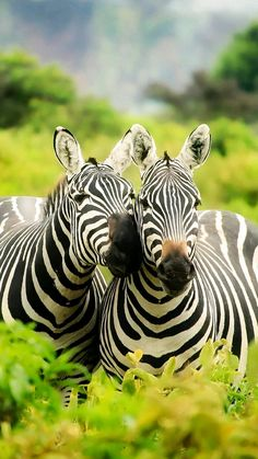 The Two Deborah's...the Zebras