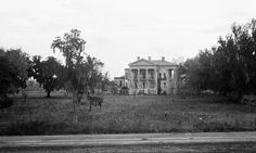 Built: 1857     Status: Ruins     Abandonded: around 1920     Architect: James Gallier, Sr.     City: White Castle Vicinity     County: Iberville Parish     State: Louisiana