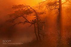 ...... by hrandrusallikas. Please Like http://fb.me/go4photos and Follow @go4fotos Thank You. :-)