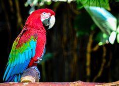 Parrot   #Wildlife Parrot, Wildlife, Bird, Instagram Posts, Travel, Animals, Parrot Bird, Viajes, Animales