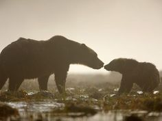 Grizzly Bear and Cub  Photograph by James Galletto