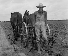 Cotton farming in Corsicana, Texas 1937