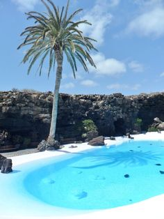 Palm tree and clear pool set in Volcanic Lava field, Jameos del Agua, Lanzarote, Canary Islands