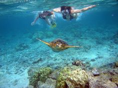 cant wait to snorkel at Anini Beach (it has the largest coral reef in Hawaii)