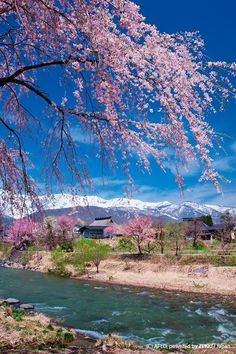 Hakuba village, Nagano May 3, 2017 「北アルプス山脈 白馬村」