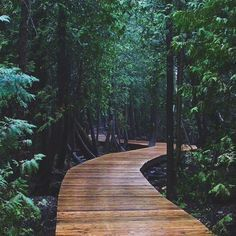 Cyprus Lake Trail (south of Tobermory). This boardwalk trail takes you through an ancient forest in Ontario. Forest Trail, Lake Forest, Places To Travel, Places To See, Tobermory Ontario, Town Country Haus, Ontario Travel, Canadian Travel, Canadian Rockies