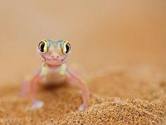 All eyes by Bridgena Barnard, via 500px